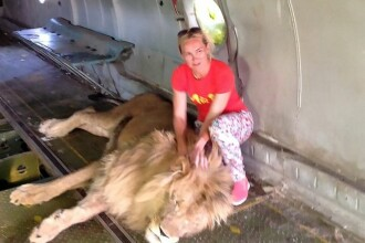 Pățania unei femei care a intrat în cușca unui leu pentru a face poze cu animalul