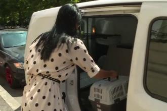 Primul serviciu de taxi pentru animalele de companie. Patrupedele pot călători și fără stăpân