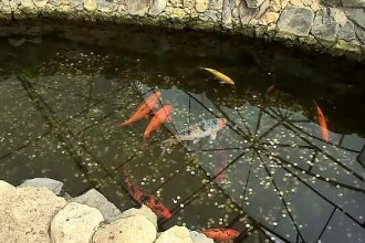 Bazinul de la Delfinariu, plin cu monede. Turiștii își pun dorințe, iar peștii sunt puși în pericol