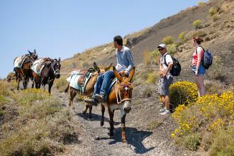 Grecii sunt obligați să creeze noi rase de măgari din cauza turiștilor supraponderali