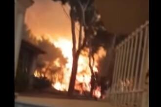Un bărbat și-a riscat viața pentru a-și salva pisica din incendiile din Grecia. VIDEO