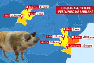 Alertă națională din cauza pestei porcine. Numărul animalelor afectate crește de la o zi la alta