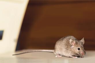 O echipă de cercetători din SUA a reuşit eliminarea virusului HIV la şoareci infectaţi