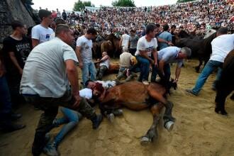 Lupte corp la corp cu cai sălbatici, la un festival din Spania. Imagini tulburătoare