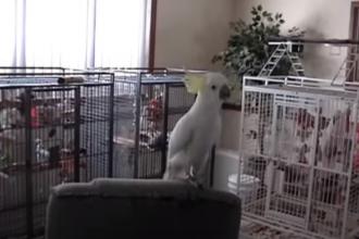 Un papagal a uimit oamenii de știință. Pasărea dansează pe melodii Queen sau Cindy Lauper