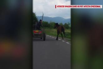 Scene înfiorătoare în Covasna. Un cal este bătut cu furca de proprietar