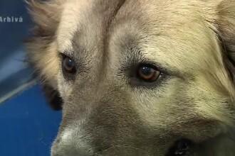 Povestea unui câine credincios. Și-a păzit stăpânul mort chiar și în fața ambulanței