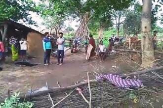 Fetiță de 7 ani ucisă de un elefant. Animalul a luat-o cu trompa din pat și a strivit-o