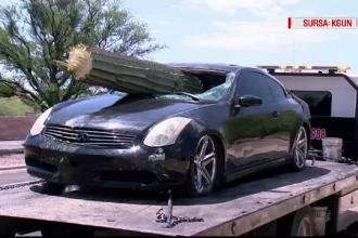 Un șofer aflat sub influența alcoolului a intrat într-un cactus uriaș
