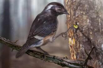 O pasăre străveche, descoperită conservată în chihlimbar. Ce noutate prezintă