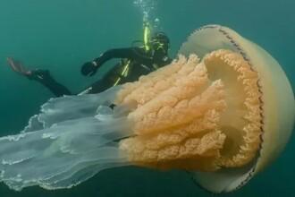 O creatură marină de dimensiunea unui om, descoperită în apele britanice. VIDEO