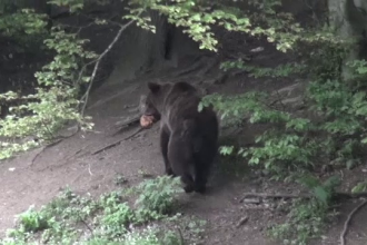 """Amenzi pentru cei care hrănesc ilegal urșii. Ministrul Mediului: """"Aşa nu se mai poate"""""""