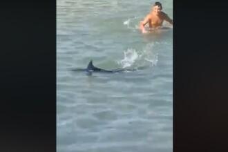 VIDEO. Momentul în care câțiva turiști omoară cu pietre un pește-spadă, în Grecia
