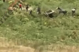 Filmare șocantă! Gestul unor ciobani români, după ce un bărbat le-a speriat caii