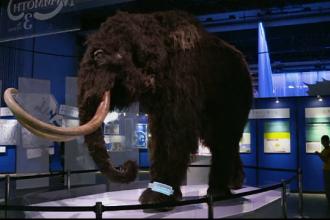 Mamutul lânos, unul dintre cele mai impozante animale, expus la Tokyo