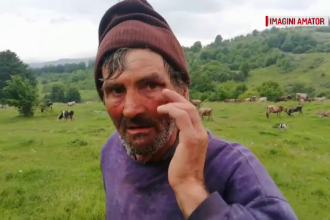 Bărbat atacat de urs, în Dâmbovița, în timp ce se afla cu vacile la păscut