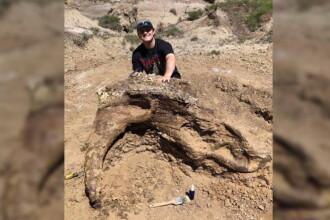 """Craniu de dinozaur, vechi de 65 de milioane de ani, găsit de un student. Locul este """"secret"""""""