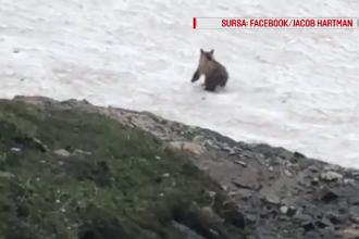 Pățania unui urs, pe un strat de zăpadă îngheţat. Turiştii au filmat scena
