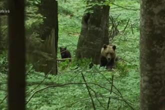 Mesaj RO-ALERT după ce un urs a fost văzut într-un sat din Horezu