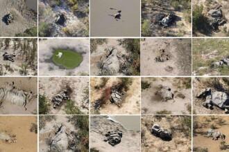 Val misterios de decese în Botswana. Peste 350 de elefanți au murit