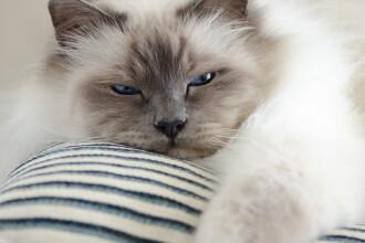 """O pisică a supraviețuit, după ce a adormit în mașina de spălat: """"Se uita la mine în timp ce se rotea. A fost tragic"""""""