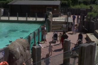 Cea mai veche grădină zoologică din lume, în pericol de dispariție. Apelul emoționant al unei legende