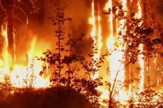 Incendiile de vegetaţie mistuie Siberia. Sunt 100 de focare active
