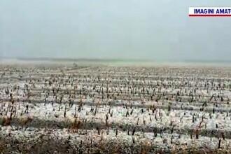 Munca fermierilor, distrusă în doar 20 de minute de o grindină teribilă.