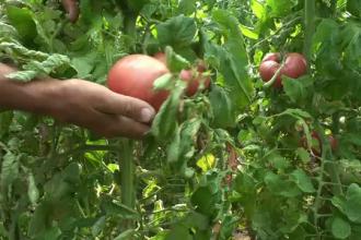 """Agricultorii români își extind solariile. Fermierii, ajutați și de programul """"Tomata"""""""