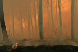 Incendiu violent de vegetație în Franța. 250 de hectare de pădure au fost devastate