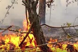 Incendiu puternic în Parcul Natural Porțile de Fier. Hectare întregi de pădure au fost mistuite de flăcări
