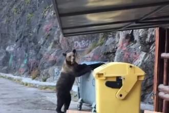 VIDEO. Reacția unui bărbat când vede un urs care se apropie și deschide un tomberon, la Barajul Vidraru