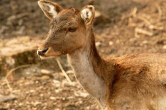 Dezastru ecologic la Nadab: jumatate din efectivele de caprioare au murit otravite