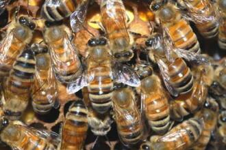 Iata casa care produce MIERE! Proprietarii sunt innebuniti de albine