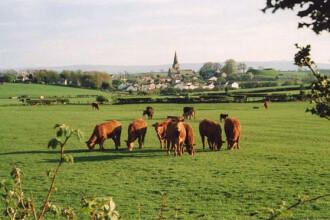 Targ agrar la Cluj: vaci de carne si bufnite teleghidate