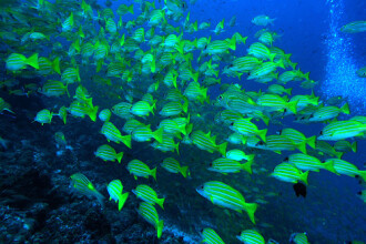 Pescuit abuziv in Marea Egee. Sute de specii marine, pe cale de disparitie