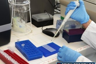 Bacteria E-coli a omorat 16 oameni. Europa, debusolata. Germania admite: Castravetii NU sunt de vina