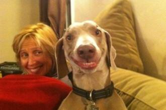 FOTO. Zambet de milioane. El este cel mai fericit caine din lume