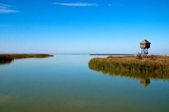 Pelicanul cu doua capete din Delta Dunarii, imaginea care naste controverse. Ce spun specialistii