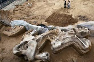 Arheologii din Serbia au descoperit primul cimitir comun din lume al unei turme de mamuti