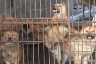 Traditiile culinare barbare din China. Cum sunt ucisi cainii pentru a fi mancati. VIDEO