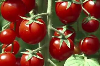 Afacere de succes. Agricultorii primesc cate 200 de euro pe un hectar cultivat cu produse bio