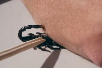 VIDEO. Cum se vede atacul unui scorpion cu incetinitorul. Un barbat s-a lasat muscat intentionat