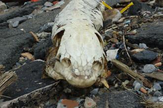 Creatura bizara, adusa de valuri, pe o plaja din New York.