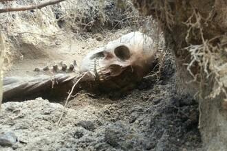 Ce a patit un cuplu dupa ce a gasit un schelet in gradina.