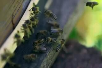Sta timp de 2 ore cu 12.000 de albine pe piele. Povestea femeii care a fascinat lumea