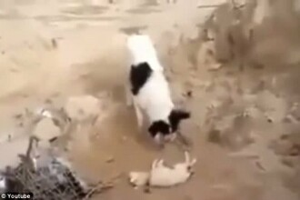 Oamenii l-au ignorat: ce a facut un caine al strazii a induiosat mii de iubitori de animale