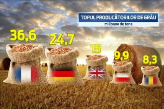 Efectele de 2 miliarde de dolari ale ploilor abundente. Romania se pregateste de cea mai buna recolta de grau de dupa 1989
