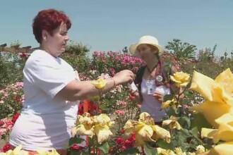 Festivalul Trandafirilor de la Sibiu. Cum arata singurele flori din lume care au mai multe culori pe aceeasi petala