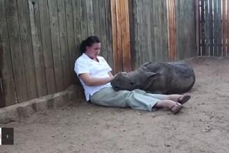 Rinocerul orfan care nu poate dormi singur noaptea. Masacrul din Africa de Sud pune intreaga specie in pericol
